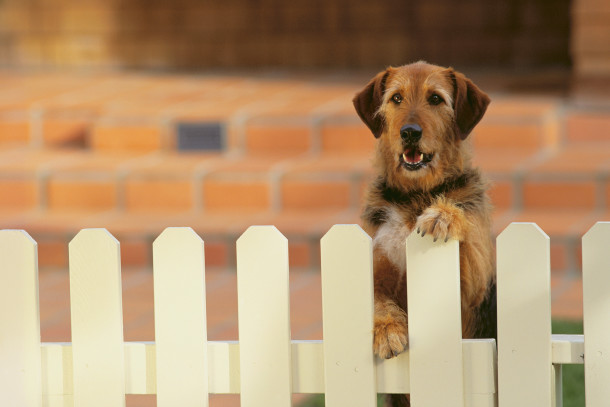 Dog standing up near a fence